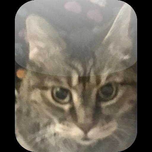 KittyCatCarb