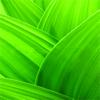 Botanical Terms - A Comprehensive Glossary
