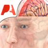 Pocket Brain – Neuroanatomia Interativa