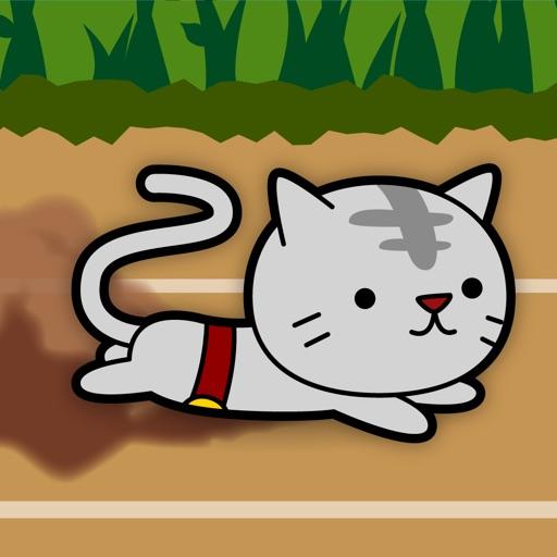 纸箱猫:Cat Sliding【喵星人钻纸箱】