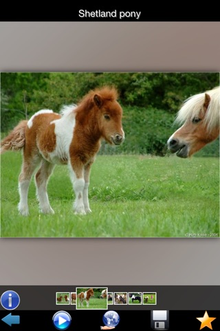 Best Horse Breeds screenshot 3