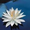 佛教音乐 Buddhism Music [雪峰音乐]
