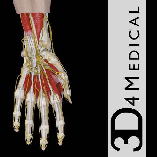 Hand & Wrist Pro III with Animations