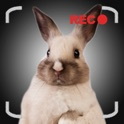 Talking Bunny the Easter Bunny for iPhone icon
