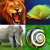 Animals Encyclopedia (Facts, Classification, Biodiversity, Habitat) & Puzzle icon