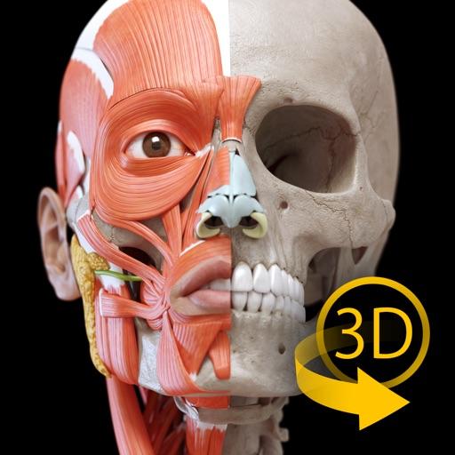 Muskelapparat- 3D Atlas der Anatomie – Knochen und Muskeln des ...
