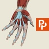 Hand: 3D Real-time Human Anatomy - Subscription anatomy of hand