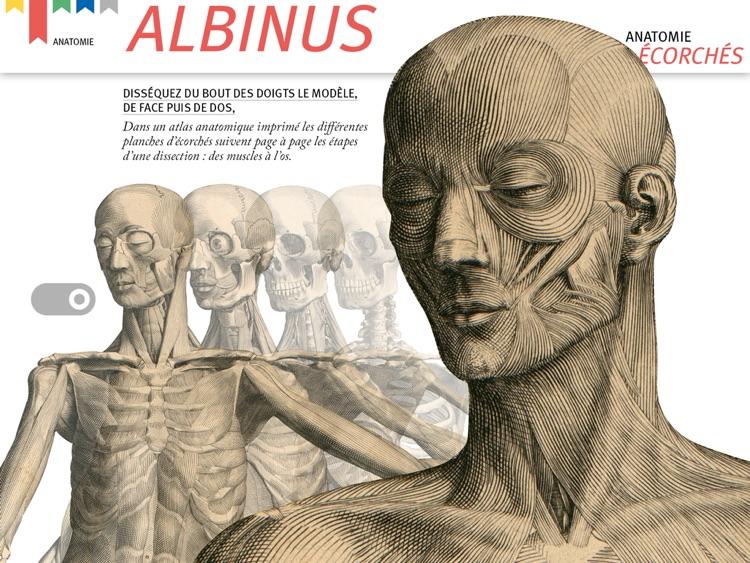 Albinus by Andre Bihler