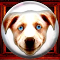 Dave's Crystal Ball - lite version icon