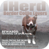 iHerd: Border Collie ...
