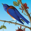 Songbirds of North America icon