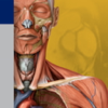 Thieme Anatomy on the Go 2.0 - English