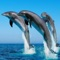 download Dolphin Wallpapers - Best Collections Of Dolphin Pictures