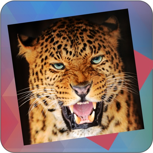 Déjà Vu - Big Cats iOS App