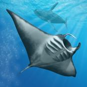 Ocean Dream icon