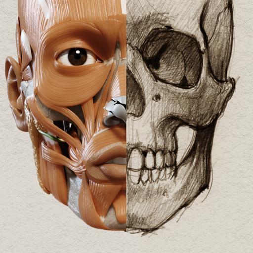 3D Анатомия для художников