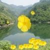 道教音乐、名人、故事合集 Taoist music,celebrity,stroies