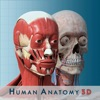 Anatomy and Physiology 3D - Anatomical Model of the Human Body