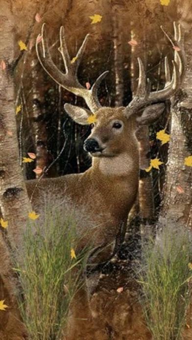 Deer Hunting Wallpapers - Best Collection Of Deer ...