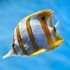 Sea Life Videos - Discover Ocean & Marine Creatures, KidVideos