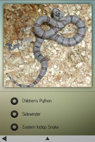 Snakes-Encyclopedia screenshot 4