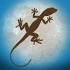Lizard Island: Observation