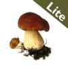 Roger's Mushrooms (Lite)