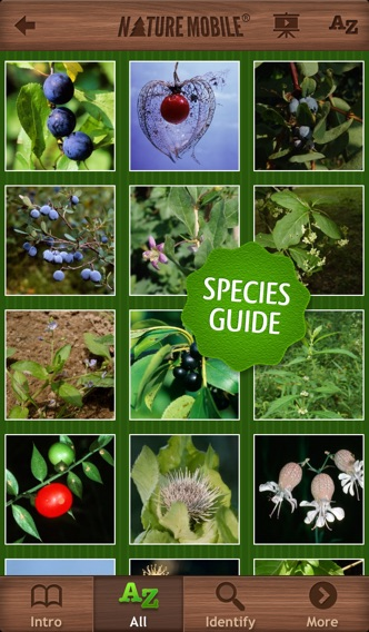 how to find wild berries