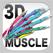 3D筋肉図鑑