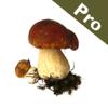 Roger's Mushrooms (Pro)