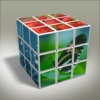 3D Flow Puzzle : New Brain Training Games - Blossom Blast World !