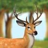 Deer Run From Wild Hunters (Pro)