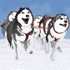Dog Sledding Winter Race : The canine cold ice sled in the north pole - Free Edition