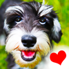 Dogs - Everything for Dog Lovers!