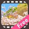 にっぽん桜絶景 無料版