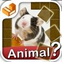 Who am I? - animals