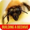 Building A Beehive - Choosing a Right Beehive for Best Beekeeping