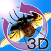 The 3D Insects Rhinoceros beetles and Stag beetles