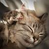 Cat Wallpapers: Best Cute Cat & Kitten Wallpapers