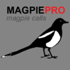 REAL Magpie Hunting Calls - REAL Magpie CALLS and Magpie Sounds! Ad Free - BLUETOOTH COMPATIBLE