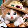 Kitty Wallpapers and Backgrounds