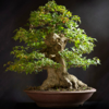 Bonsai Basics - Learn All About Growing Bonsai Trees