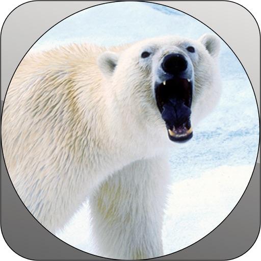 Deadly Wild Polar Bear Attack Simulator Pro iOS App