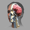 Zygote 3D Anatomy Atlas & Dissection Lab - Zygote Media Group, INC.
