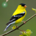 Bird Song Id USA Automatic Recognition and Reference - Songs and Calls of America