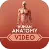 Human Anatomy for Beginners