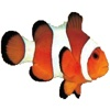 Clownfish and Shark