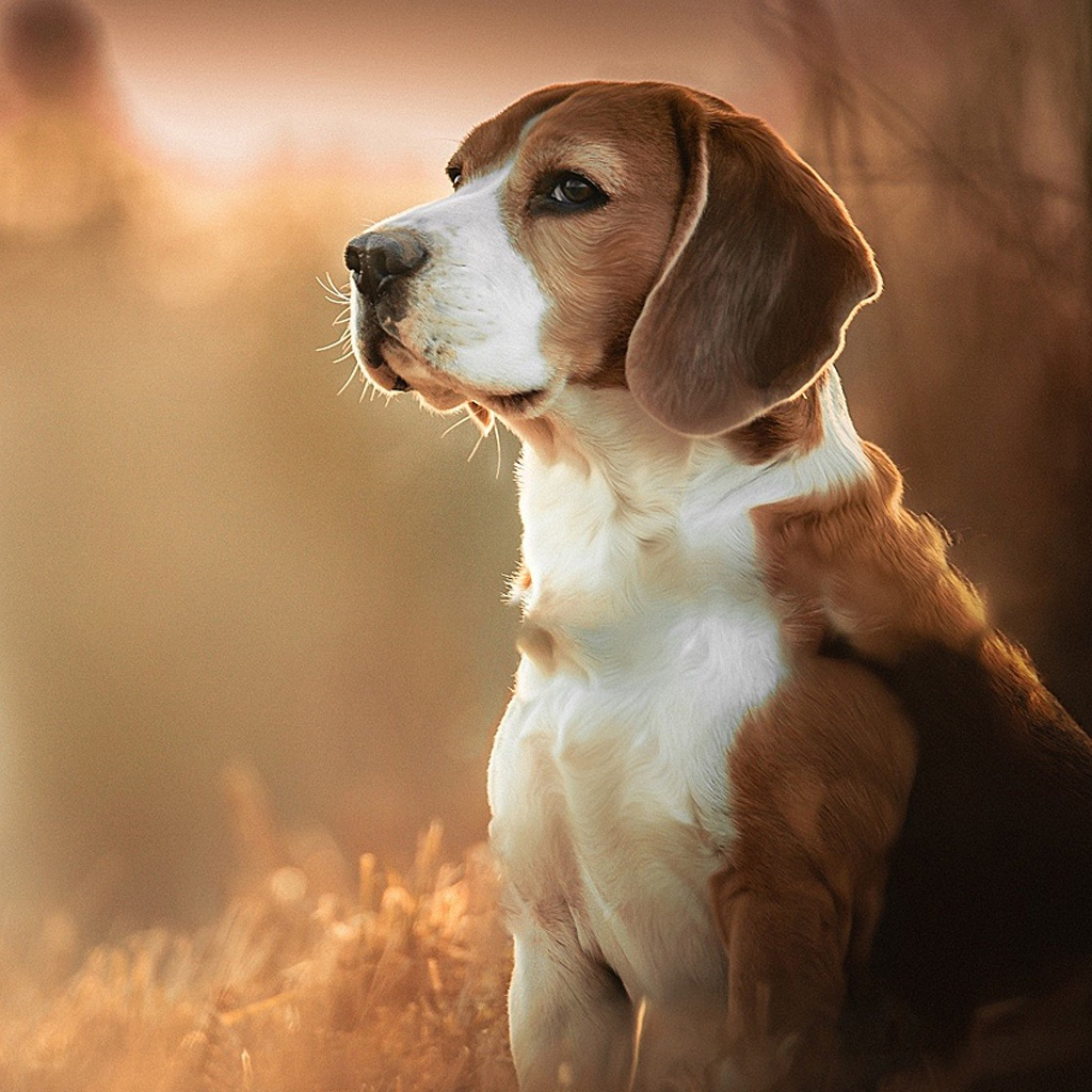 Dog Wallpapers Backgrounds Hd Home Screen Maker With