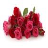 Роза-мимоза