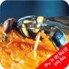 How To Get Rid Of Fruit Flies fruit interactive